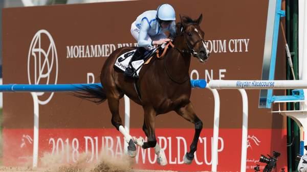 Photo de HEAVY METAL cheval de PLAT