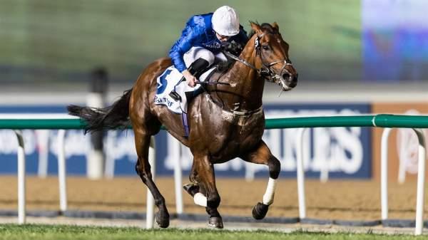 Photo de BENBATL cheval de PLAT