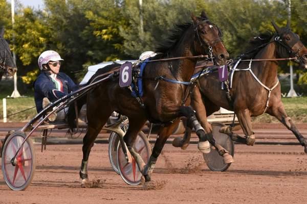 Photo de FOSTER WOOD cheval de TROT ATTELE