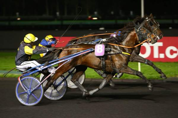 Photo de FEAR FACTOR cheval de TROT ATTELE