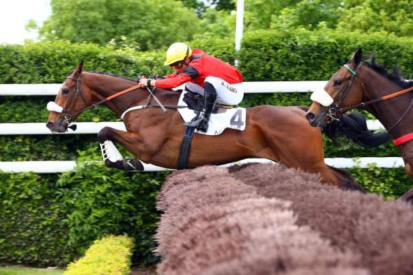 Photo de FIUMICINO cheval de STEEPLE CHASE