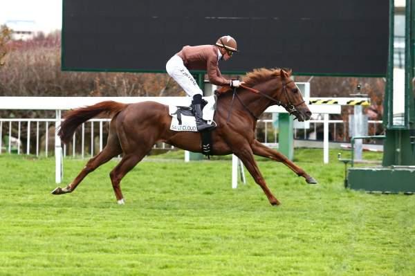 Photo de PHOTO CHOC cheval de PLAT