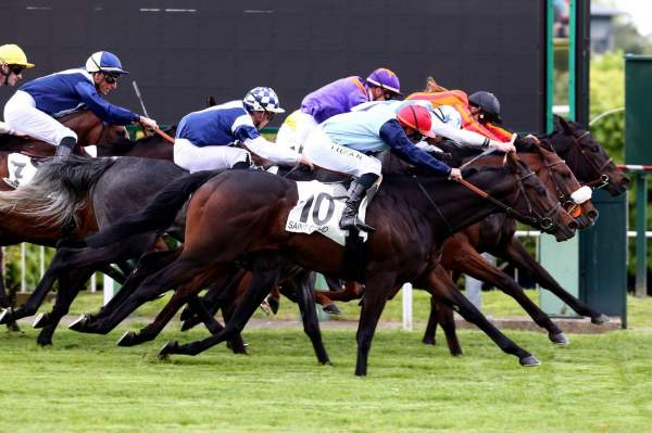 Photo de CALYPSO SONG cheval de PLAT