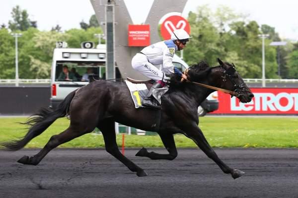 NAPA VALLEY - La fiche CANALTURF du cheval, performances pmu ...