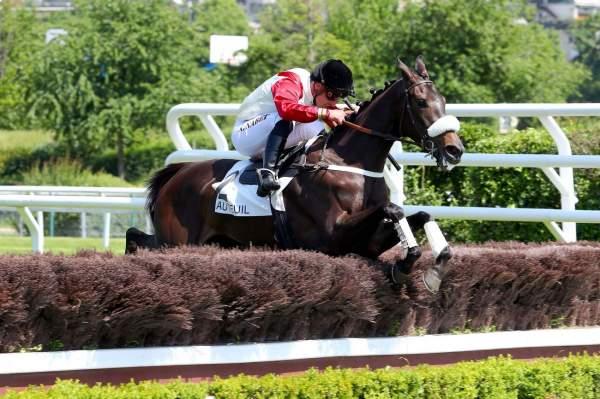 Photo de THRILLING cheval de HAIES
