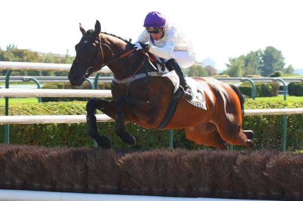 Photo de RASANGO cheval de STEEPLE CHASE