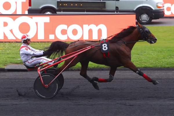 Photo de EL VILLAGIO cheval de TROT ATTELE