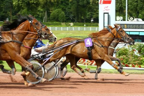 Photo de EBENE PIYA cheval de TROT ATTELE