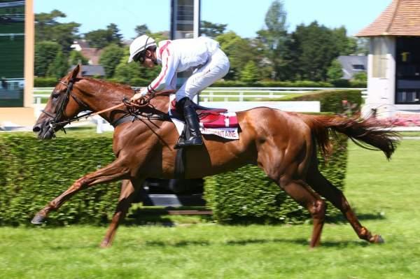 Photo de LADY DE ROCHE cheval de STEEPLE CHASE