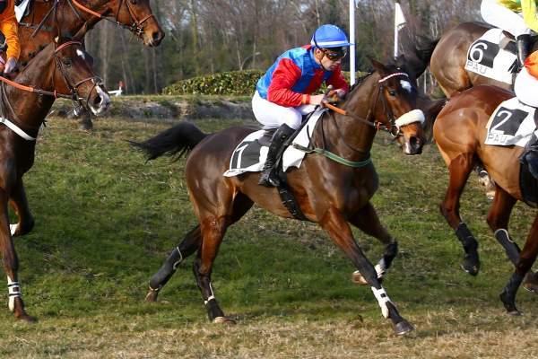 """Résultat de recherche d'images pour """"bella sun cheval"""""""