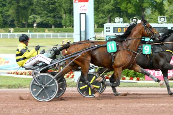 Photo de EQUIANO cheval de TROT ATTELE