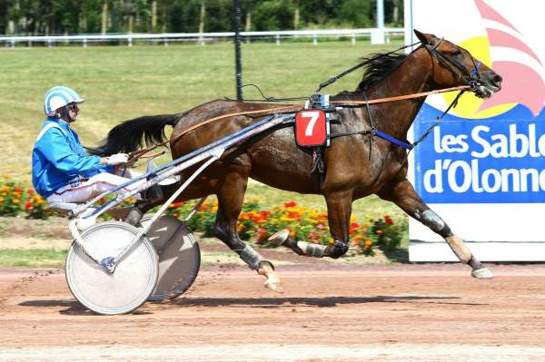 Photo de ELIE DE BEAUFOUR cheval de TROT ATTELE