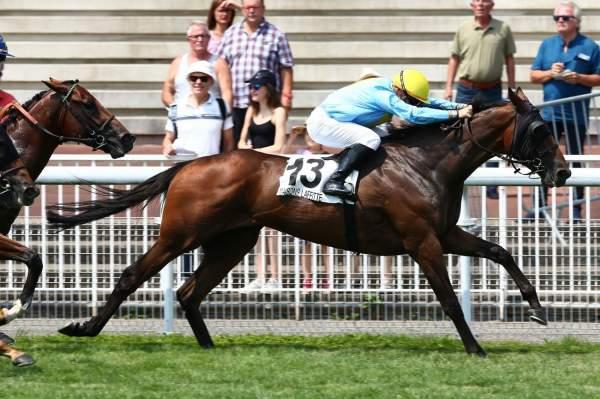 Photo de FALCO DELAVILLIERE cheval de PLAT