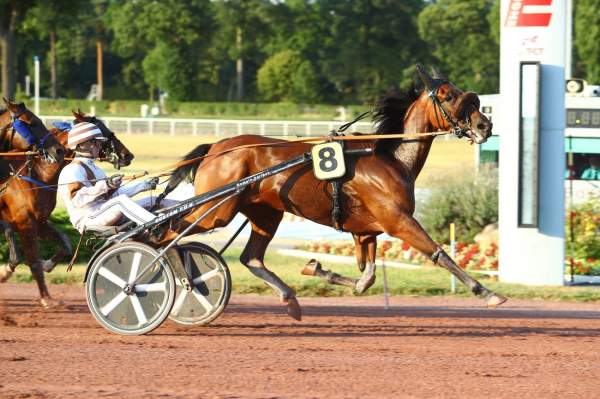 Photo de EILEEN cheval de TROT ATTELE