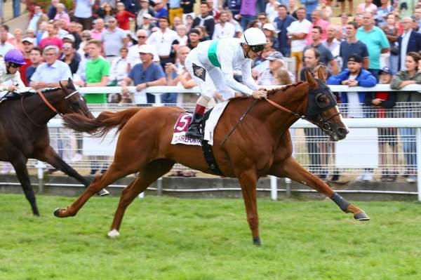 Photo de CALL THE WIND cheval de PLAT