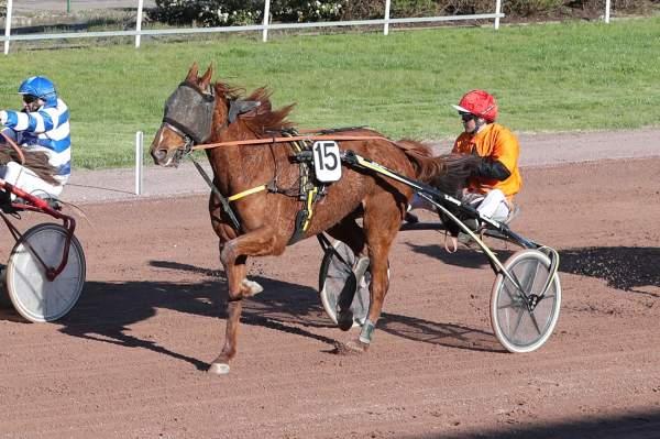 Photo de DAVY DE TAZIERE cheval de TROT ATTELE