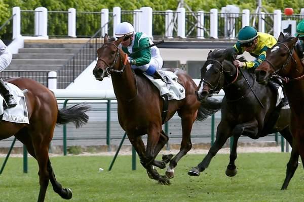 Photo de MY LENNY cheval de PLAT
