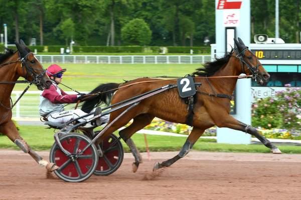 Photo de FUBRIA cheval de TROT ATTELE