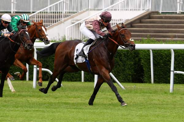 Photo de MY SWASHBUCKLER cheval de PLAT