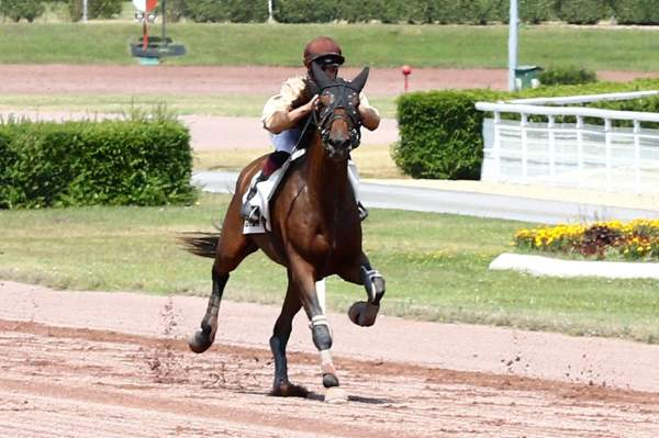 La photo de FARCEUR ACE