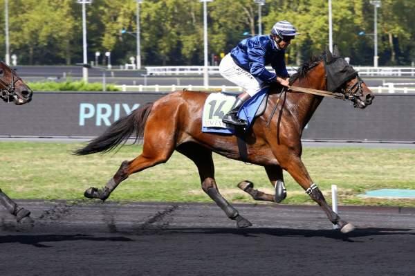 Photo de DU RHUM DES ILES cheval de TROT MONTE