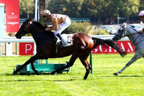 Photo de MRS SIPPY cheval de PLAT