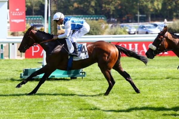Photo de SAHELIAN  cheval de PLAT