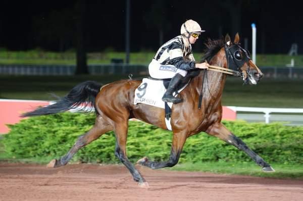 Photo de EFFET cheval de TROT MONTE