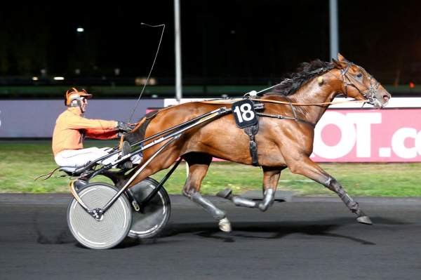 Photo de CHARLY DE L'AUNAY cheval de TROT ATTELE