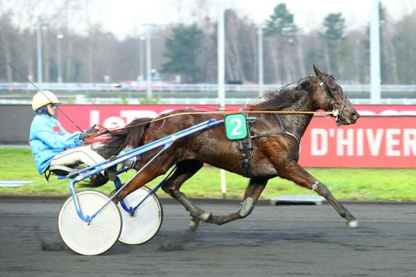 Photo de GOLDY MARY  cheval de TROT ATTELE