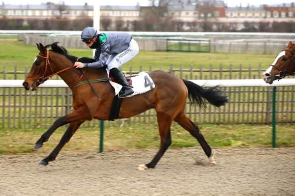 Photo de SARSTEDT cheval de PLAT