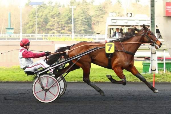 Photo de GO ALONG cheval de TROT ATTELE