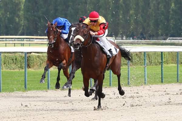 Photo de DESIDERATA cheval de PLAT