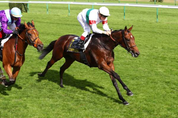 Photo de L'AIGLE cheval de PLAT