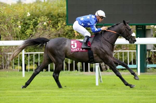 Photo de AMYR DU SOLEIL cheval de PLAT