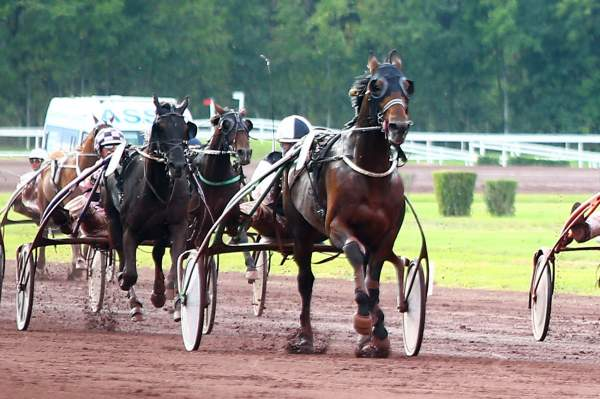 Photo de FOR EVER THE BEST cheval de TROT ATTELE