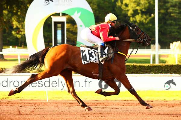 Photo de DUARTE  cheval de TROT MONTE