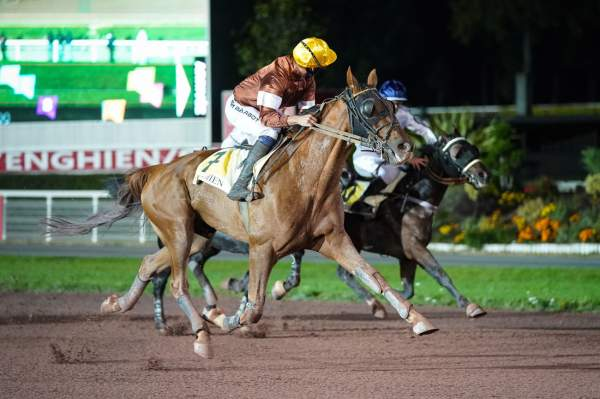 Photo de FAUVE DE FELLIERE cheval de TROT MONTE
