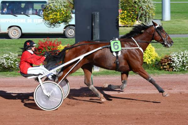 Photo de DIABOLO NIGHT cheval de TROT ATTELE