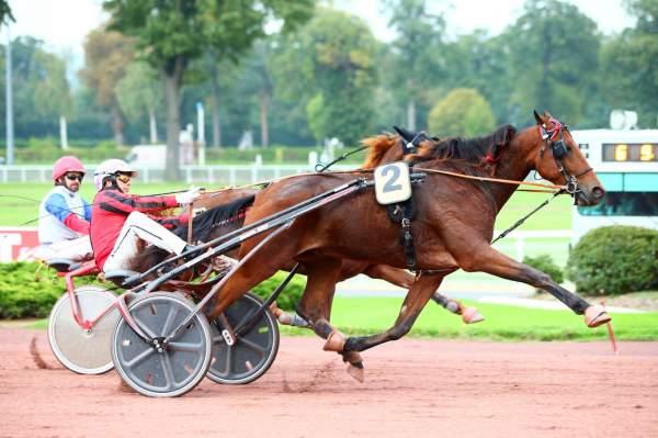 Photo de GENERAL DE KACY cheval de TROT ATTELE