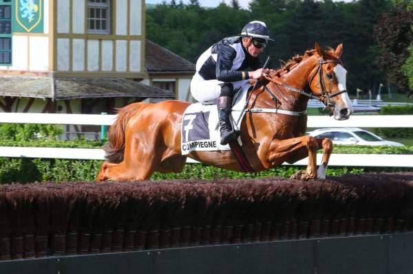 Photo de FACILE A VIVRE cheval de STEEPLE CHASE