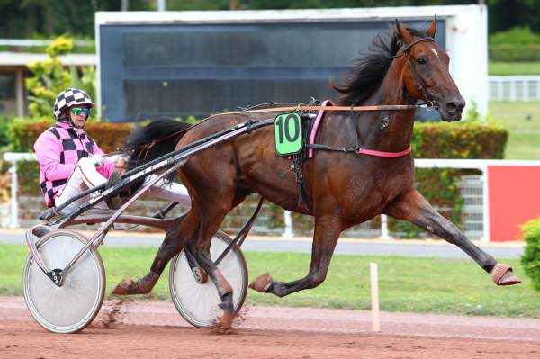 Photo de COLONEL cheval de TROT ATTELE