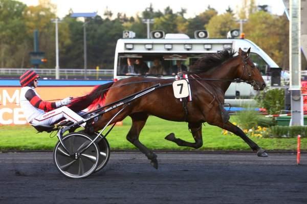 Photo de GUEVARA DU PONT cheval de TROT ATTELE