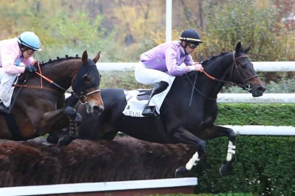 Photo de DISMOITOUT D'OC cheval de STEEPLE CHASE