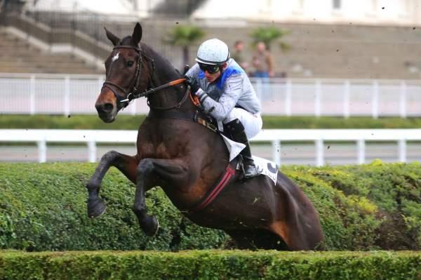 Photo de ARAGORN D'ALALIA cheval de STEEPLE CHASE