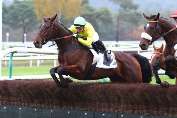 Photo de AMORDORO cheval de STEEPLE CHASE