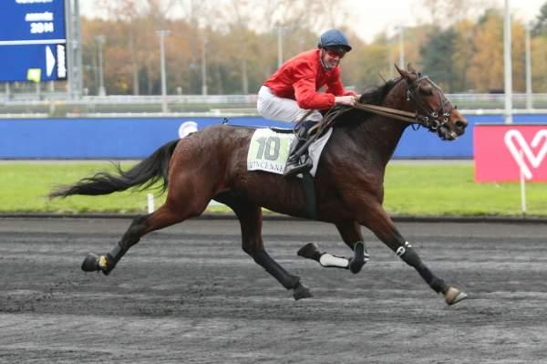 Photo de GAROU DU CHENE cheval de TROT MONTE