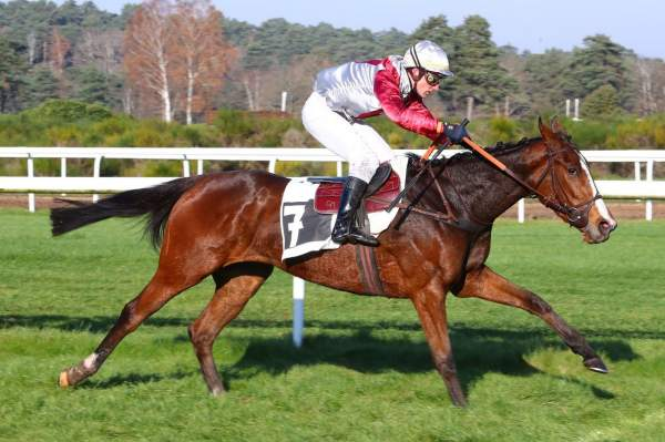 Photo de GIFT OF FORTUNE cheval de STEEPLE CHASE