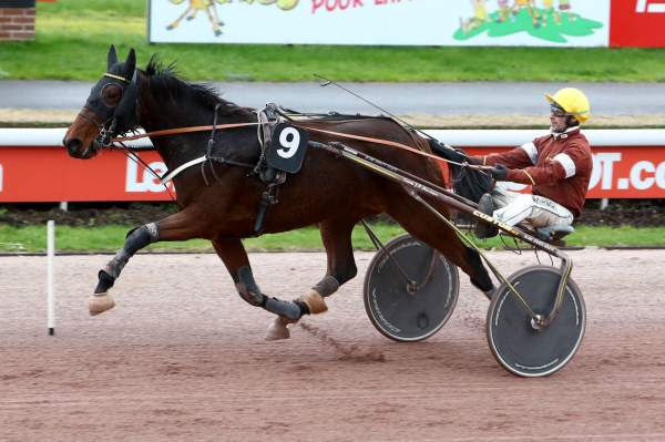 Photo de GRACIEUSE DU LUPIN cheval de TROT ATTELE
