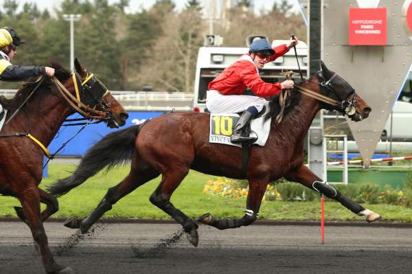 Photo de FADO DU CHENE cheval de TROT MONTE